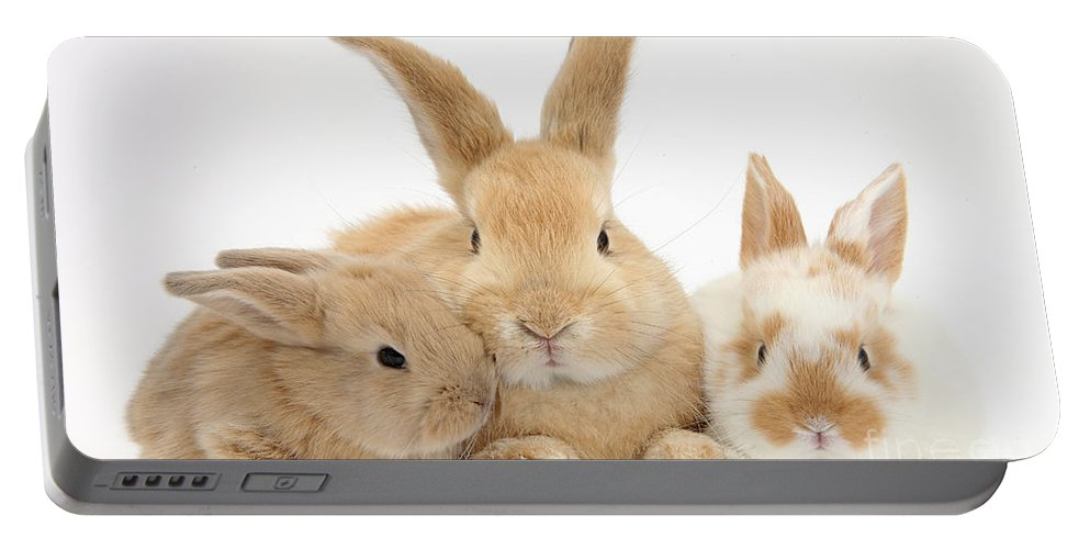 Nature Portable Battery Charger featuring the photograph Sandy Rabbit And Babies by Mark Taylor