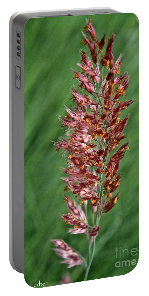 Outdoors Portable Battery Charger featuring the photograph Savannah Ruby Grass by Susan Herber
