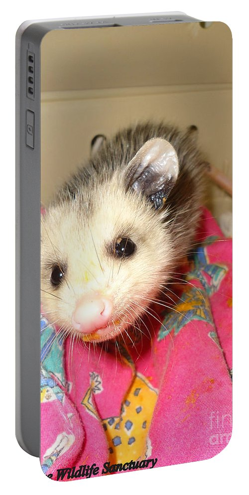 Opossum Photographs Portable Battery Charger featuring the photograph Say Cheese by Art Dingo