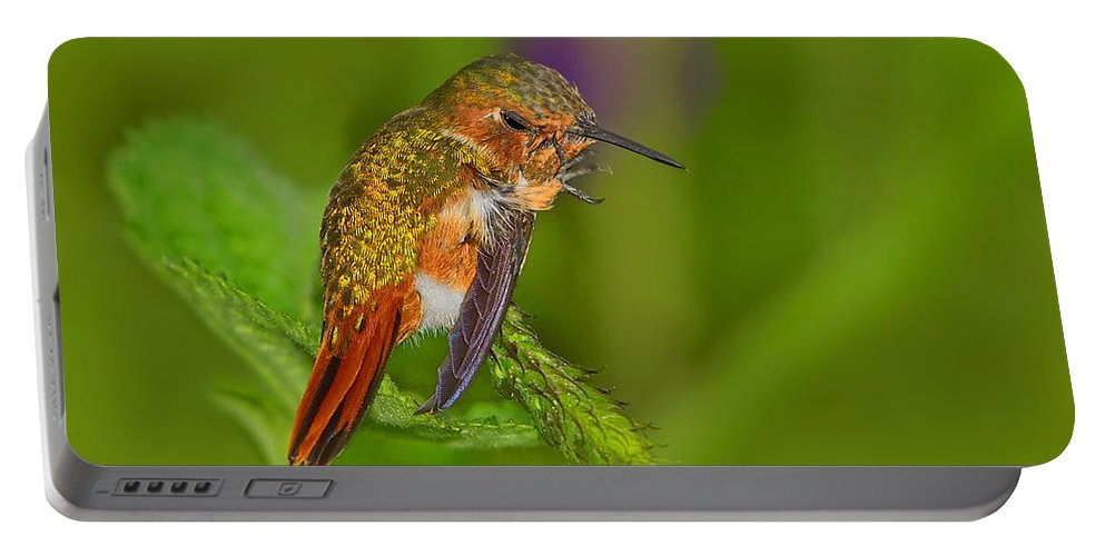 Scintillant Hummingbird Portable Battery Charger featuring the photograph Scratch That Itch by Tony Beck