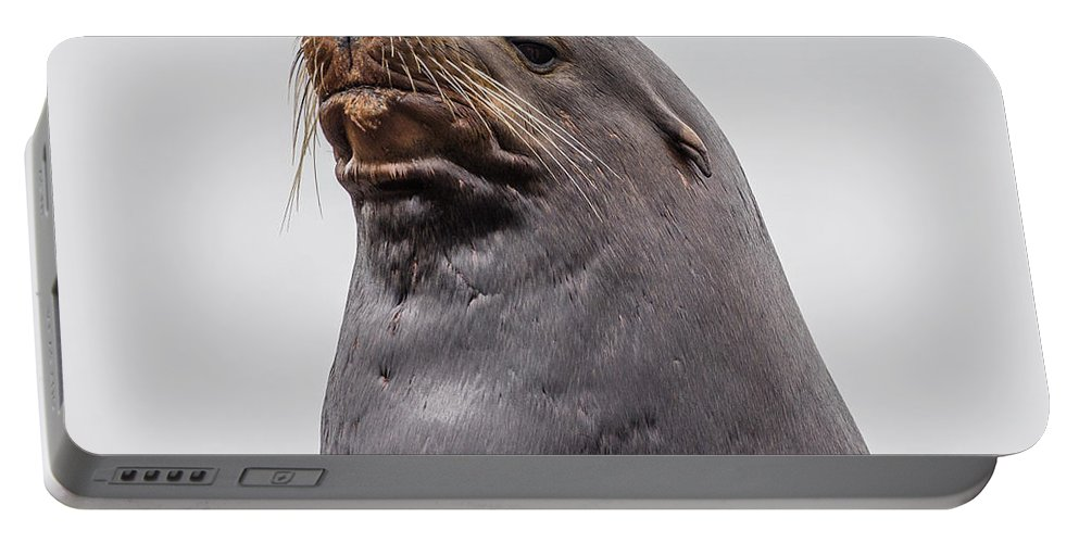 Sea Lion Portable Battery Charger featuring the photograph Sea Lion Satisfaction by Greg Nyquist
