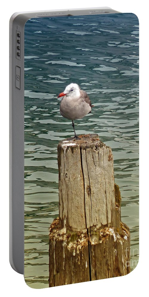 Seagull Portable Battery Charger featuring the photograph Seagull by Methune Hively