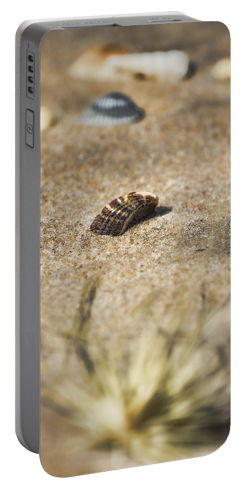 Seashells Portable Battery Charger featuring the photograph Seahells V3 by Douglas Barnard