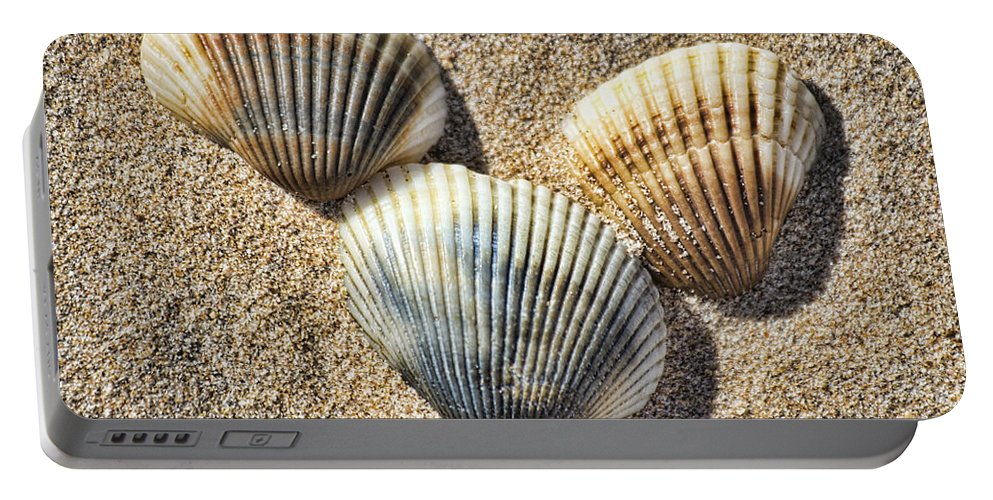 Shells Portable Battery Charger featuring the photograph Seashells V2 by Douglas Barnard