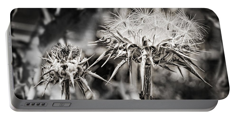 Seeds Portable Battery Charger featuring the photograph Seedy Neighborhood In Bw by Kelley King