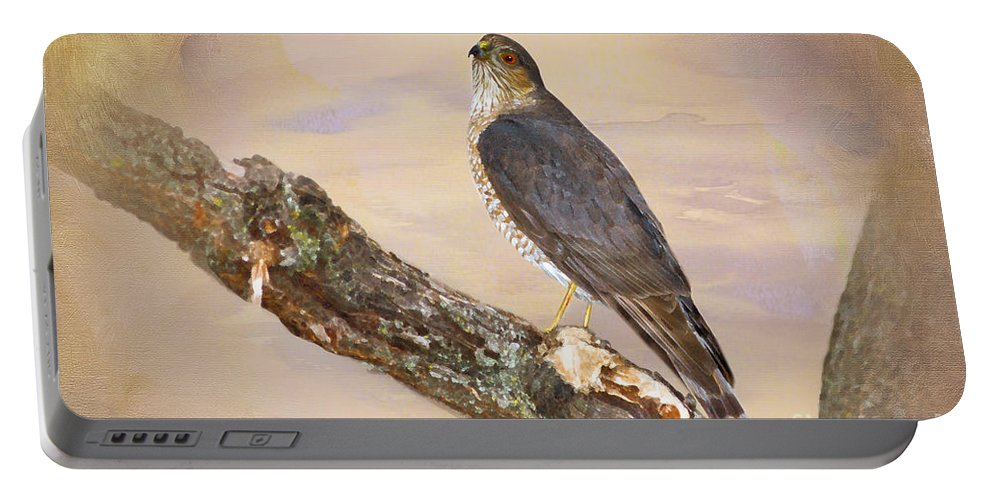 Sharp Shinned Hawk Portable Battery Charger featuring the photograph Sharp-shinned Hawk by Betty LaRue