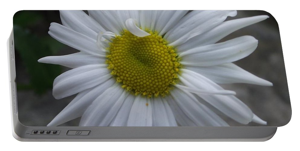 Garden Flower Portable Battery Charger featuring the photograph Shasta Daisy by Michelle Welles