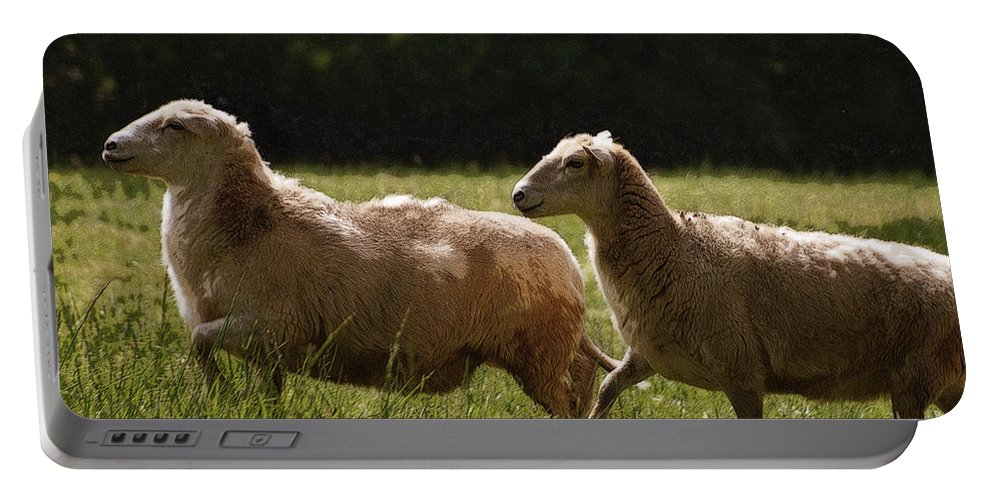 Sheep Portable Battery Charger featuring the photograph Sheep On The Move by Lydia Holly