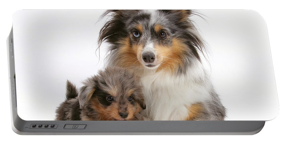 Animal Portable Battery Charger featuring the photograph Sheepdog With Puppy by Mark Taylor