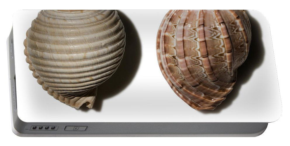 Animal Portable Battery Charger featuring the photograph Shell Line Systems by Raul Gonzalez Perez
