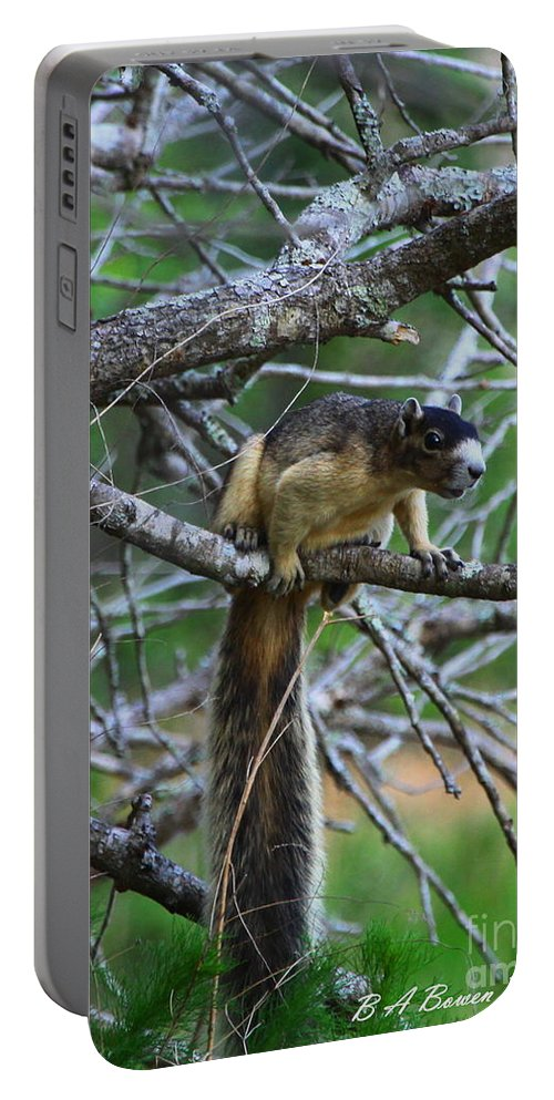 Shermans Fox Squirrel Portable Battery Charger featuring the photograph Shermans Fox Squirrel by Barbara Bowen