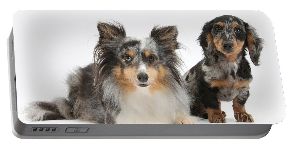 Dog Portable Battery Charger featuring the photograph Shetland Sheepdog And Dachshund by Mark Taylor