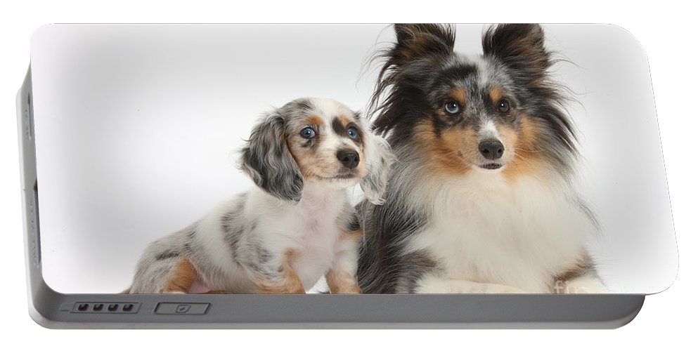 Animal Portable Battery Charger featuring the photograph Shetland Sheepdog And Dachshund Puppy by Mark Taylor