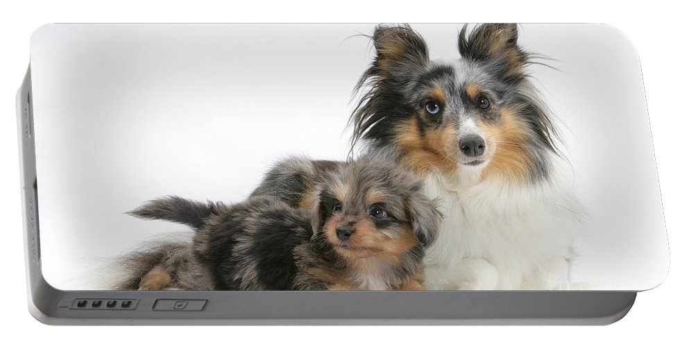 Animal Portable Battery Charger featuring the photograph Shetland Sheepdog With Pup by Mark Taylor