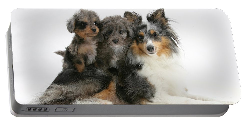 Animal Portable Battery Charger featuring the photograph Shetland Sheepdog With Puppies by Mark Taylor