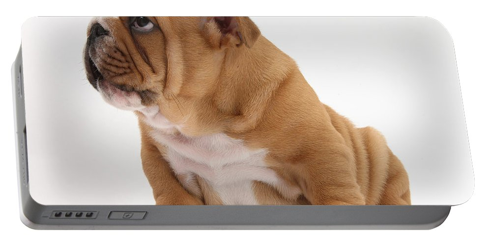Dog Portable Battery Charger featuring the photograph Shy Bulldog Pup by Mark Taylor