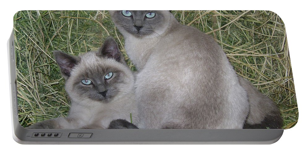 Cat Portable Battery Charger featuring the photograph Siamese Haystack by Charles and Melisa Morrison