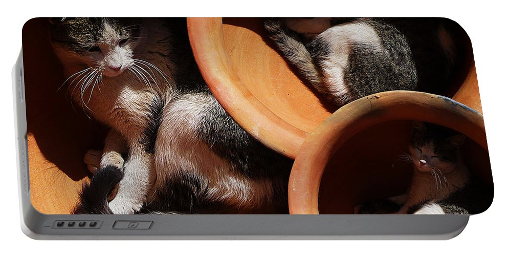 Cats Portable Battery Charger featuring the photograph Siesta 4 by Xueling Zou
