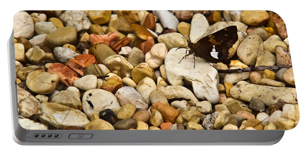 Silver-spotted Skipper Portable Battery Charger featuring the photograph Silver Spotted Skipper 1 by Douglas Barnett
