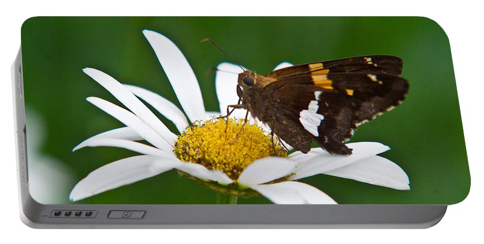 Silver Portable Battery Charger featuring the photograph Silver Spotted Skipper 2 by Douglas Barnett