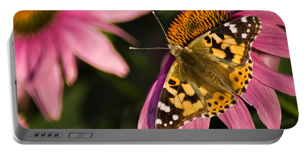 Butterfly Portable Battery Charger featuring the photograph Simple Butterfly by Bill Pevlor