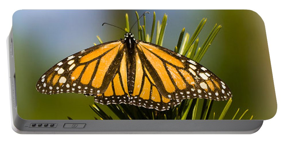 California Portable Battery Charger featuring the photograph Single Monarch Butterfly by Darcy Michaelchuk