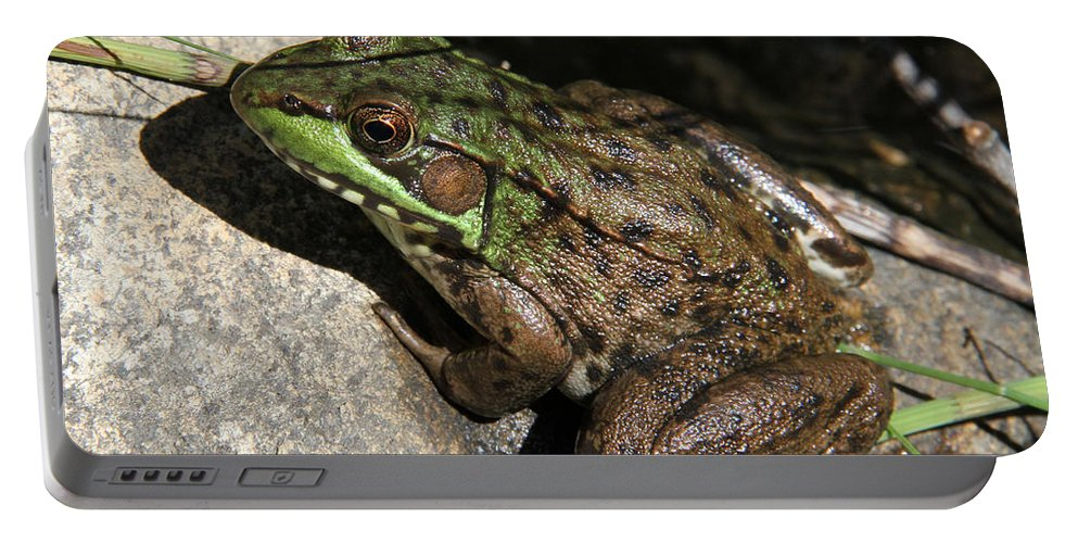 Fog Portable Battery Charger featuring the photograph Sitting Pretty by Doris Potter