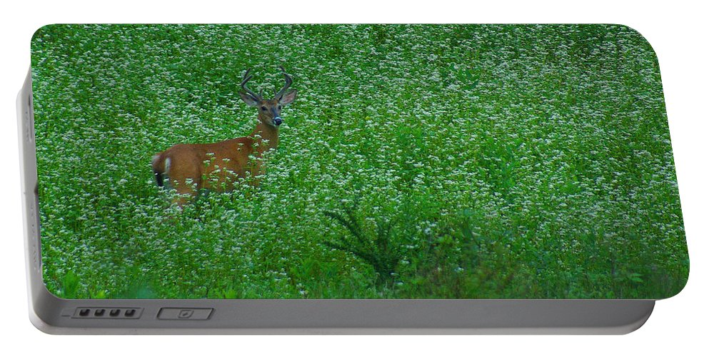 Pennsylvania Portable Battery Charger featuring the photograph Six Point Deer In Wildflowers by Rich Walter