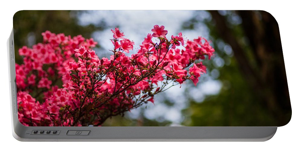 Rhodies Portable Battery Charger featuring the photograph Skylit Blooms by Mike Reid