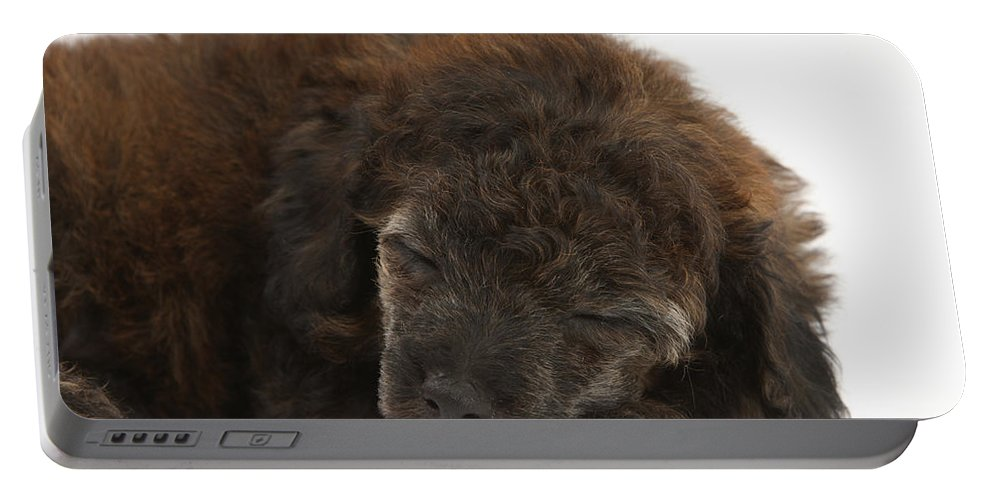 Animal Portable Battery Charger featuring the photograph Sleeping Puppy by Mark Taylor