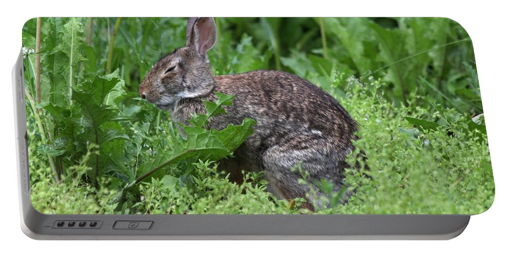 Wildlife Portable Battery Charger featuring the photograph Sleepy Time by Lori Tordsen
