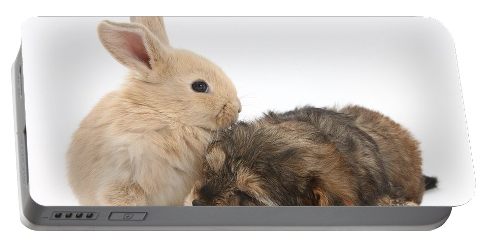 Nature Portable Battery Charger featuring the photograph Sleepy Yorkipoo Pup With Baby Sandy by Mark Taylor