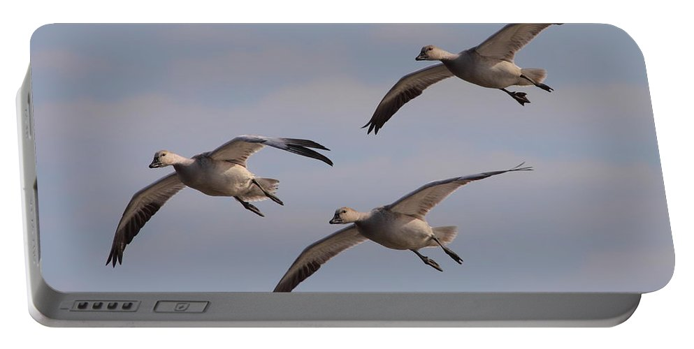 Geese Portable Battery Charger featuring the photograph Snow Goose Trio by Bruce J Robinson