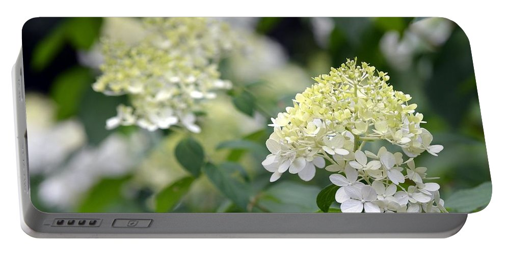 Snowflake Portable Battery Charger featuring the photograph Snowflake Hydrangea 2 by Maria Urso
