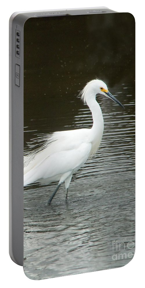 Birds Portable Battery Charger featuring the photograph Snowy Egret by Regina Geoghan