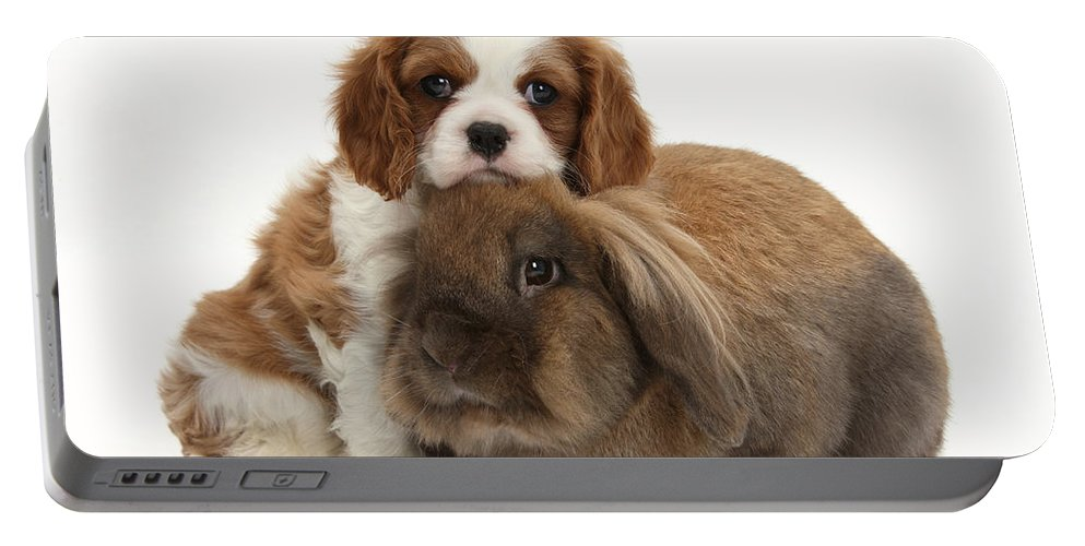 Animal Portable Battery Charger featuring the photograph Spaniel Pup With Rabbit by Mark Taylor