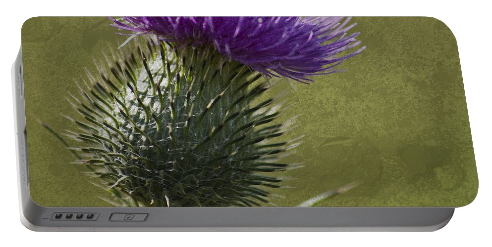 Spear Thistle Portable Battery Charger featuring the photograph Spear Thistle With Texture by Steve Purnell