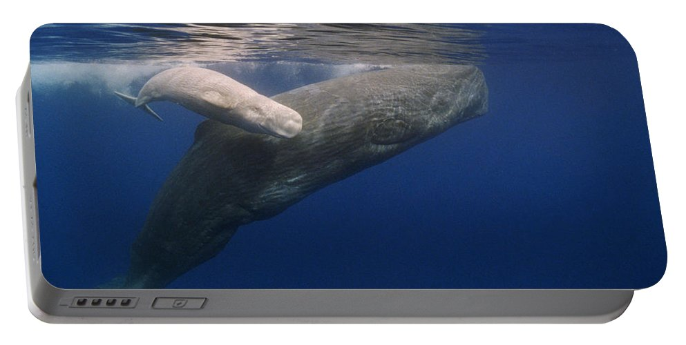 00114551 Portable Battery Charger featuring the photograph Sperm Whale Mother And White Calf by Flip Nicklin