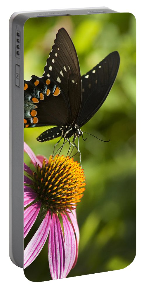 Papilio Troilus Portable Battery Charger featuring the photograph Spicebush Swallowtail Butterfly And Coneflower by Kathy Clark