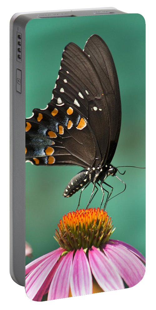 Papilio Troilus Portable Battery Charger featuring the photograph Spicebush Swallowtail Butterfly by Kathy Clark