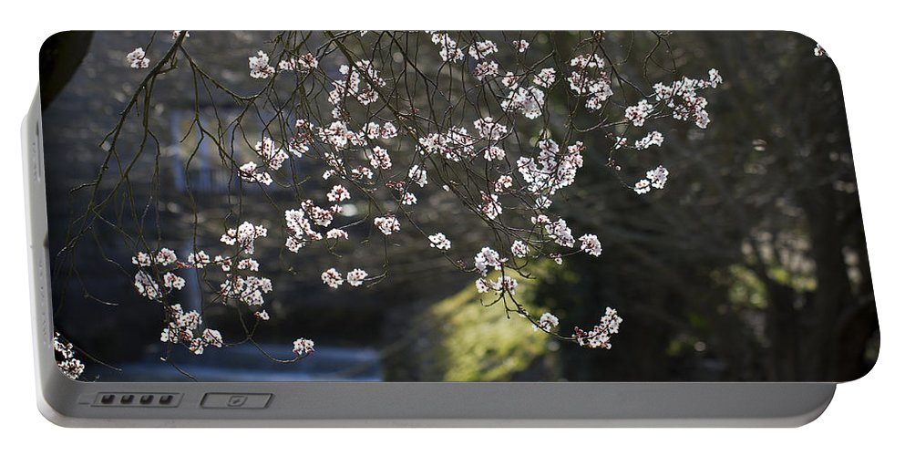 Clare Bambers Portable Battery Charger featuring the photograph Spring Blossom by Clare Bambers
