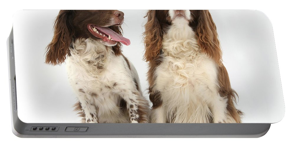 Dog Portable Battery Charger featuring the photograph Springer Spaniels by Mark Taylor