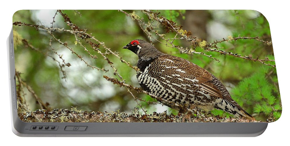 Falcipennis Canadensis Portable Battery Charger featuring the photograph Spruce Grouse by Joshua McCullough