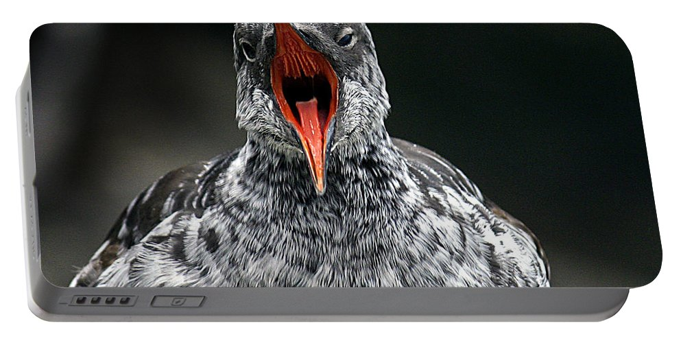 Bird Portable Battery Charger featuring the photograph Squawk by Jean Noren