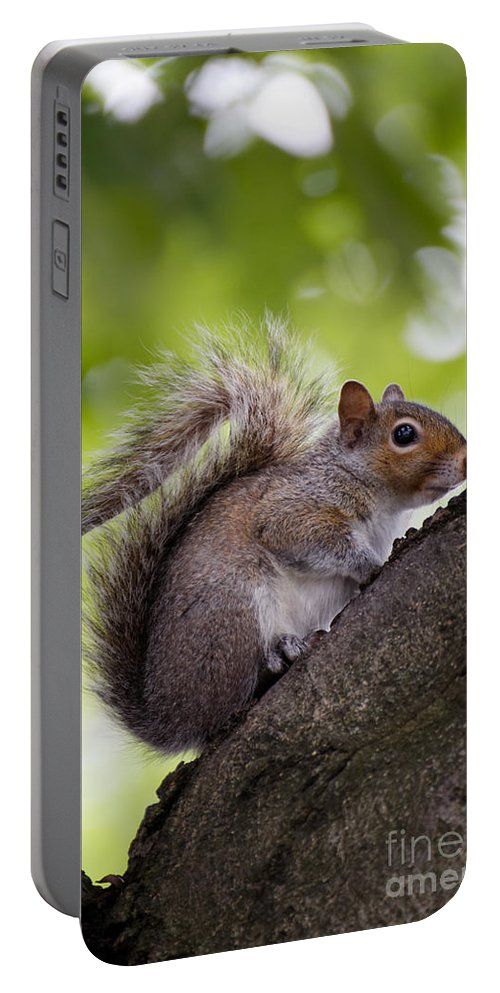 Alert Portable Battery Charger featuring the photograph Squirrel Before Green Leaves by Jannis Werner
