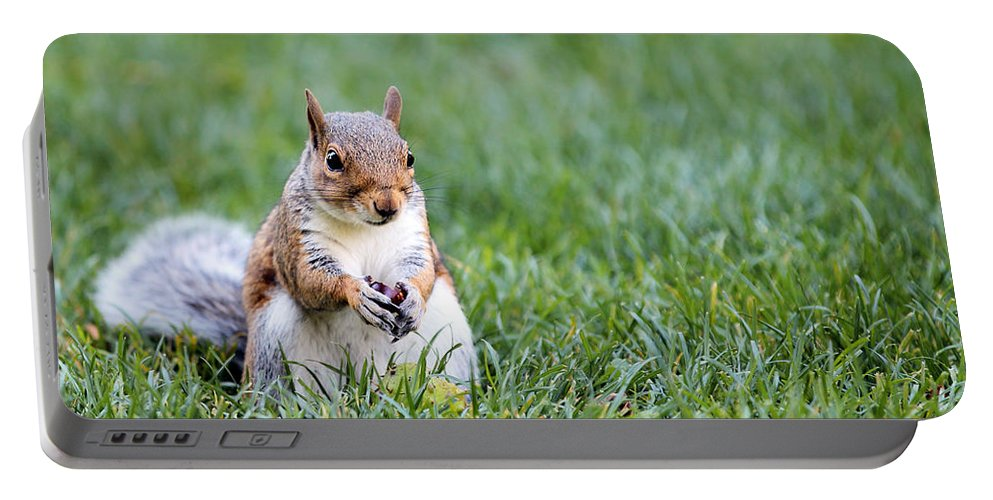 Animal Portable Battery Charger featuring the photograph Squirrel by Paul Fell