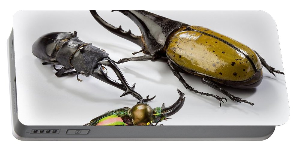 Giraffe Stag Beetle Portable Battery Charger featuring the photograph Stag Beetles by Science Source