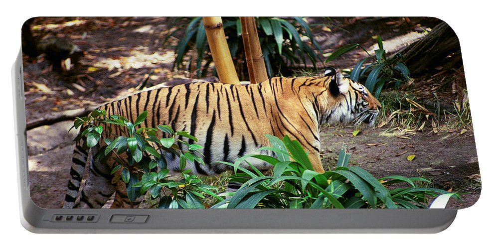Portable Battery Charger featuring the photograph Stalking by Michael Frank Jr