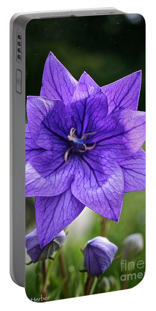 Floral Portable Battery Charger featuring the photograph Star Balloon Flower by Susan Herber
