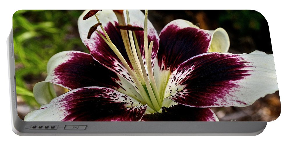 Floral Portable Battery Charger featuring the photograph Star Bright by Susan Herber